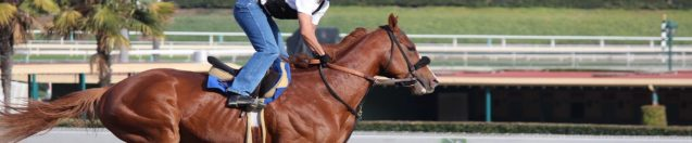 How To Train Like An Olympic Level Horse Jockey | It's Harder Than You Think!